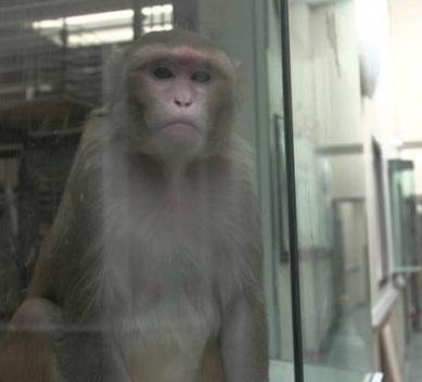 OU primate